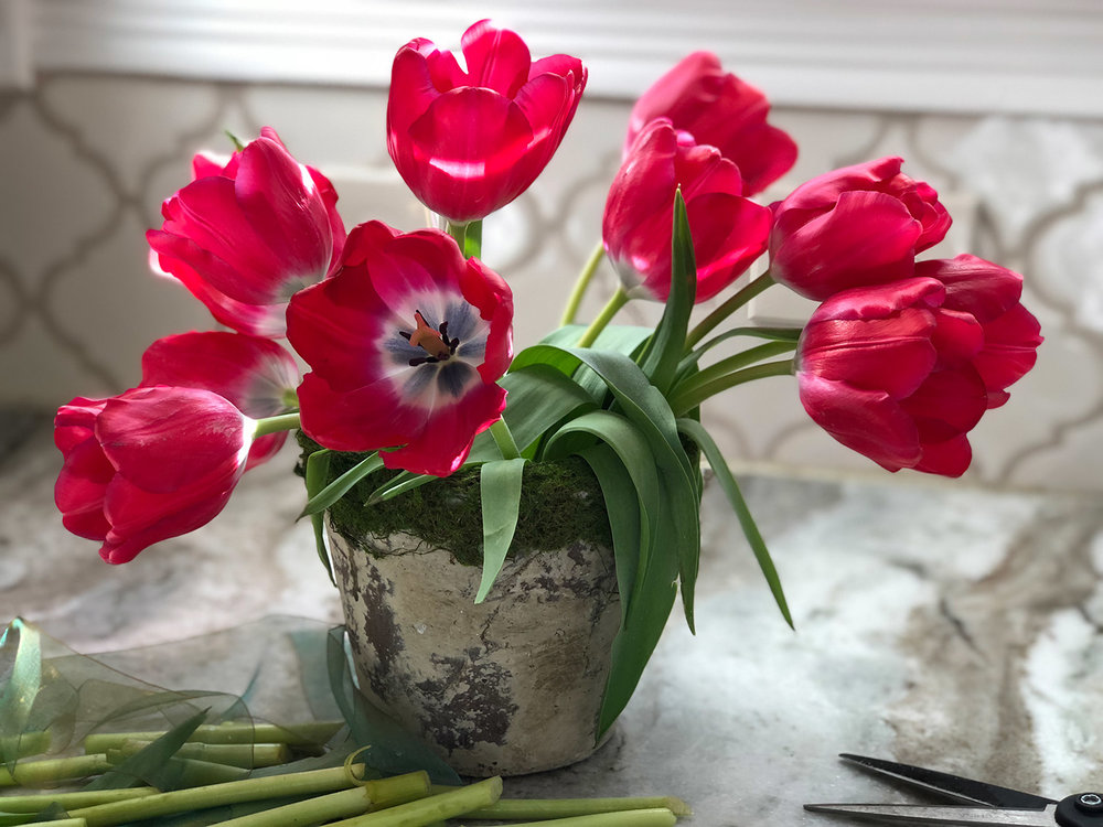 Red tulips in moss rimmed pot