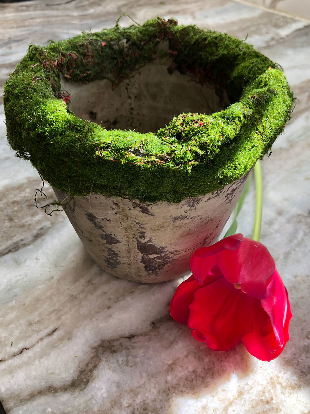 moss ribbon glued to pot