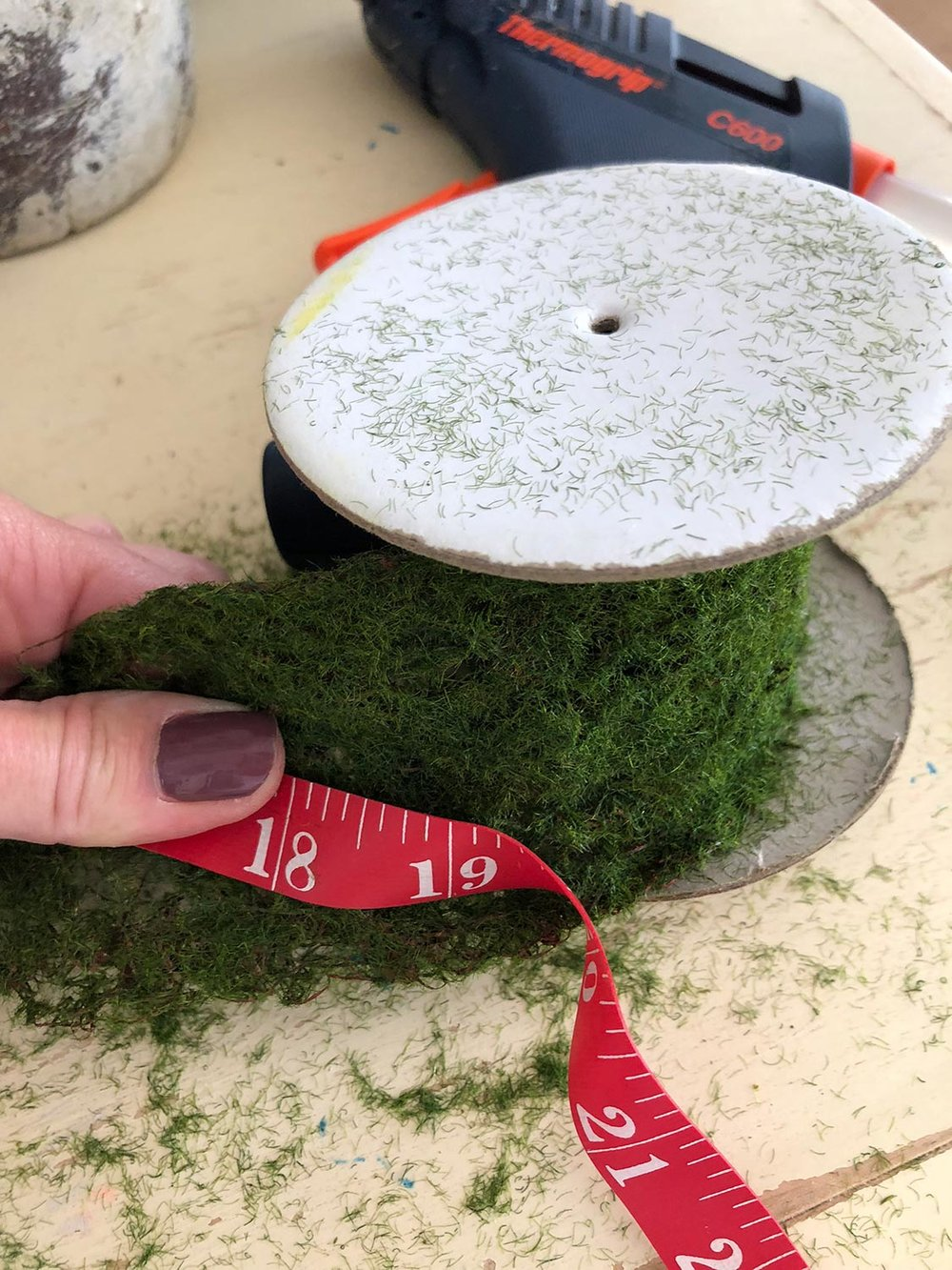measuring moss ribbon