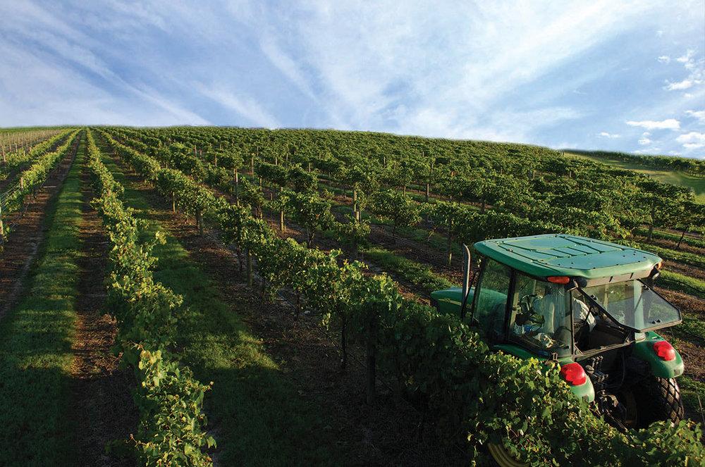 Family winery vineyard in Florida