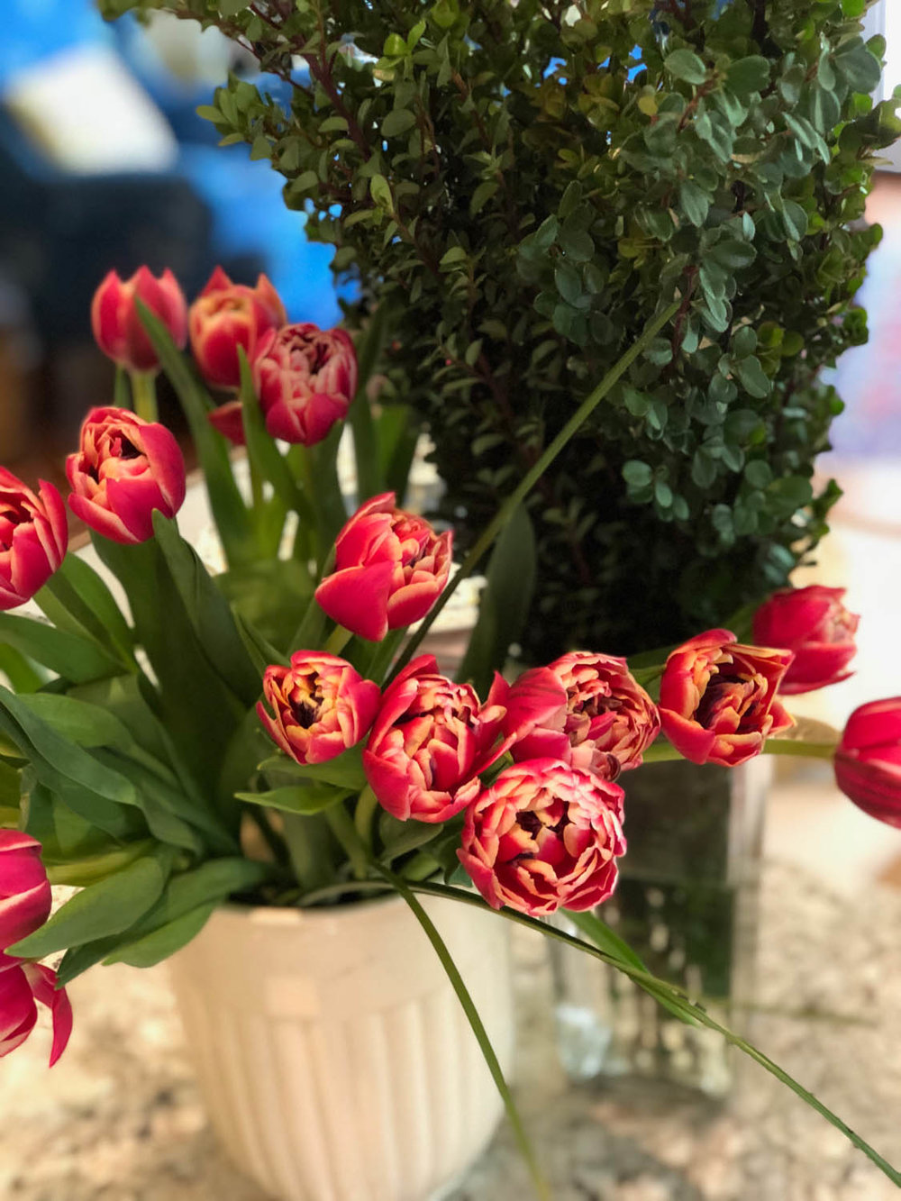 tulips in container with boxwood