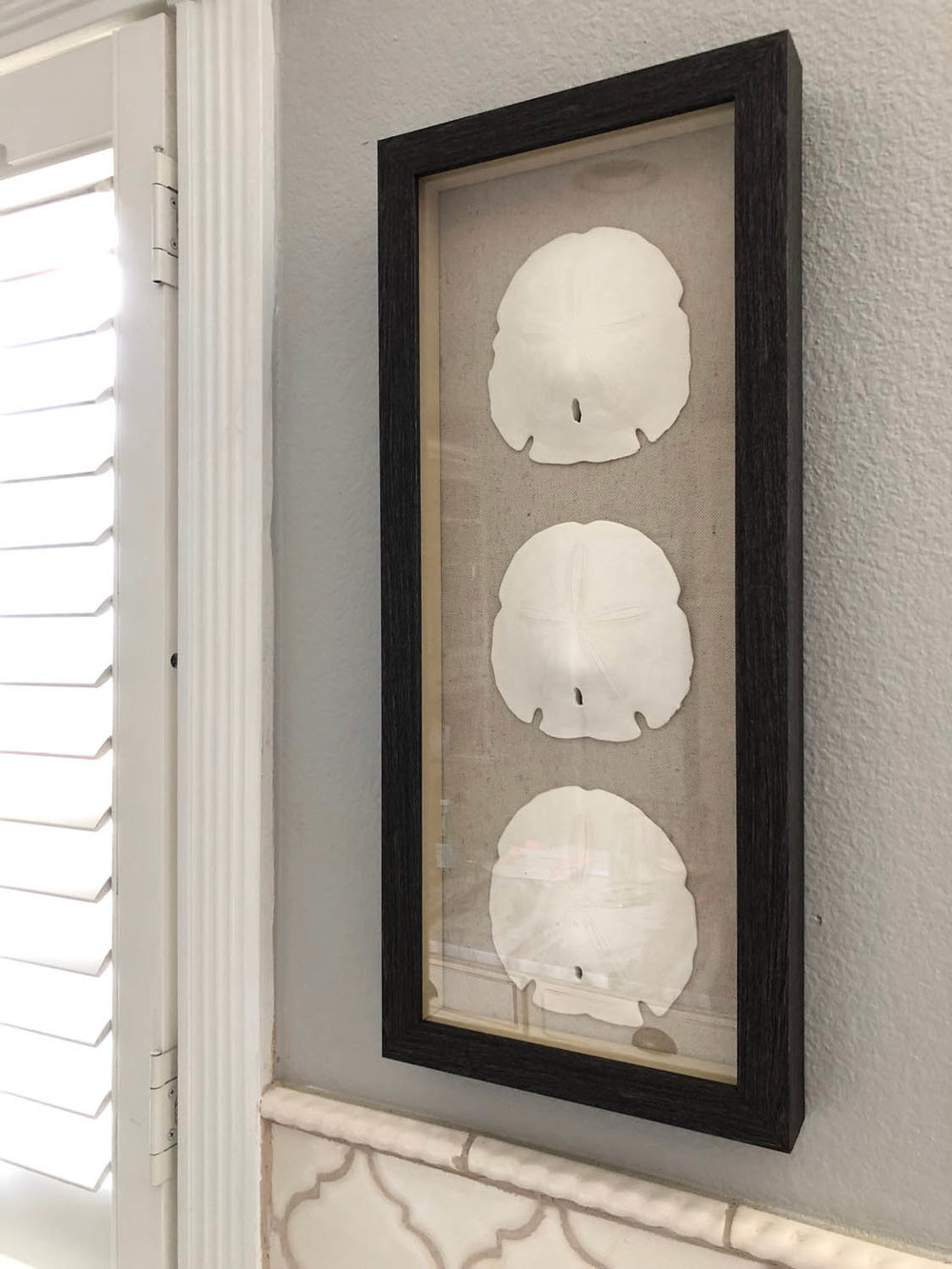 DIY shadow box ideas with sand dollar memory collection