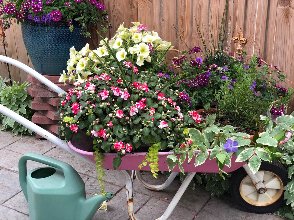 Pin wheelbarrow with flowers on the patio