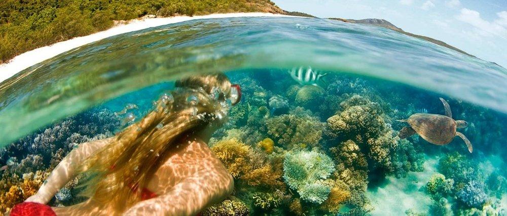 Snorkelling at Fitzroy Island