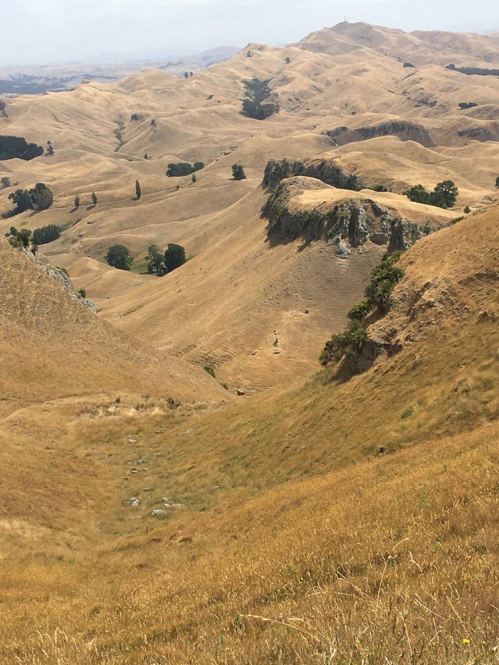 from TeMata Peak.JPG