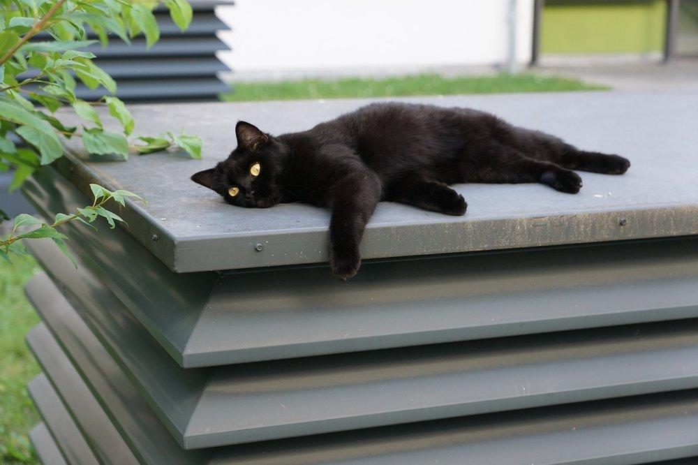 black cat superstitions in japan lucky calendar days ichigoichielove.jpg
