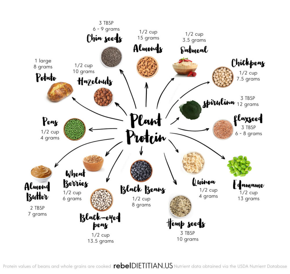 Top-Sources-of-Plant-Based-Protein-1024x969.jpg