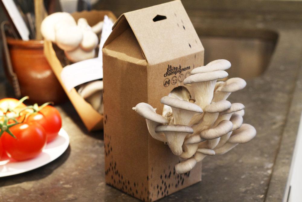 La Boîte à Champignons  - Au quotidien, La Boite à Champignons récupère du marc de café et le fait transformer en kit de pleurotes par des personnes en insertion professionnelle : tout ça pour faire pousser chez soi de délicieux champignons.Et ça ne s'arrête pas là!La matière restante sert de fertilisant naturel pour les jardinières et potagers !Voir le site