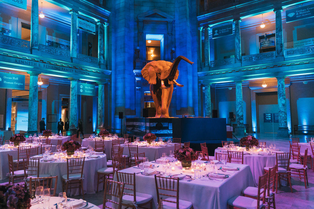 dallas cowboys - Team Dinner at the Smithsonian Natural History Museum