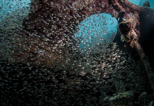 BlueCoralAqabaRedseaShoelsFish