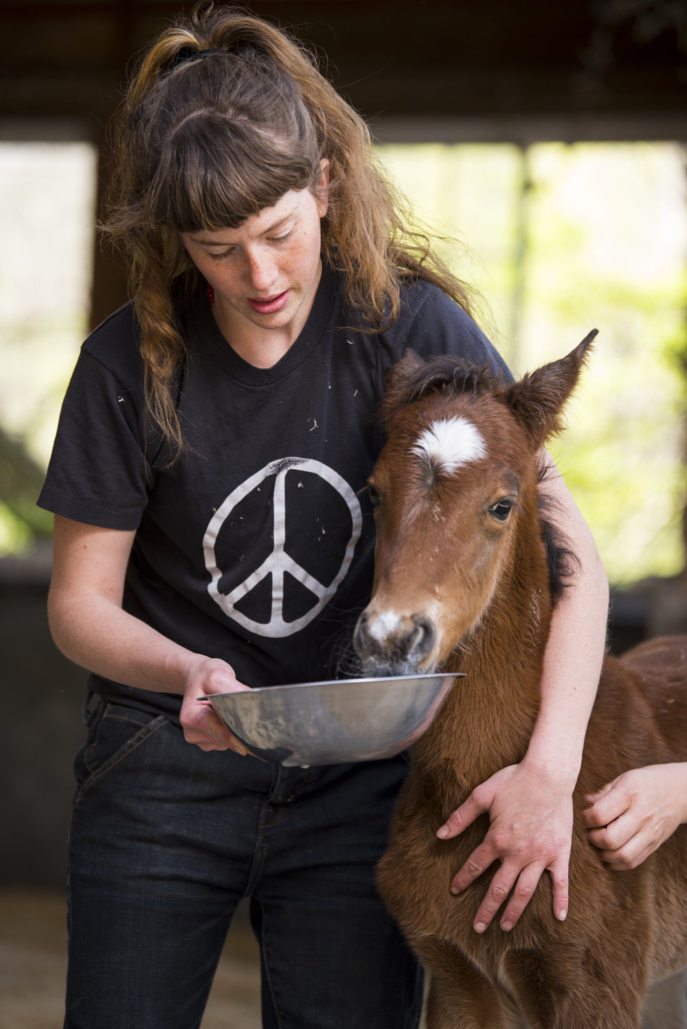 Dandelion Duff feeds Virtue, an orphaned baby female foal, at the Last Chance Corral in Athens, Ohio.  Virtue was separated from her mother and suffered from a form of depression, resulting in appetite problems and needing to be hand fed.