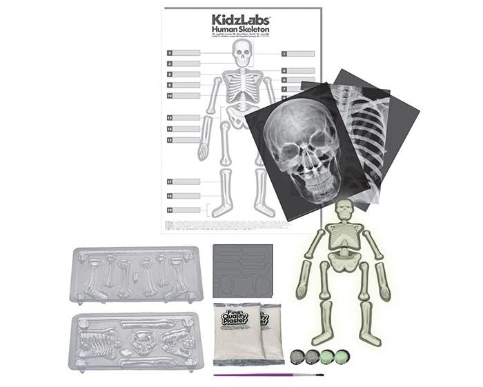 4M-Human-Skeleton-119-P3375-alt2 (1).jpg