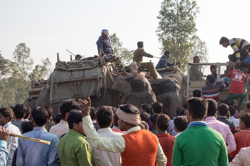 7_ElephantsForCrowdControl1.jpg