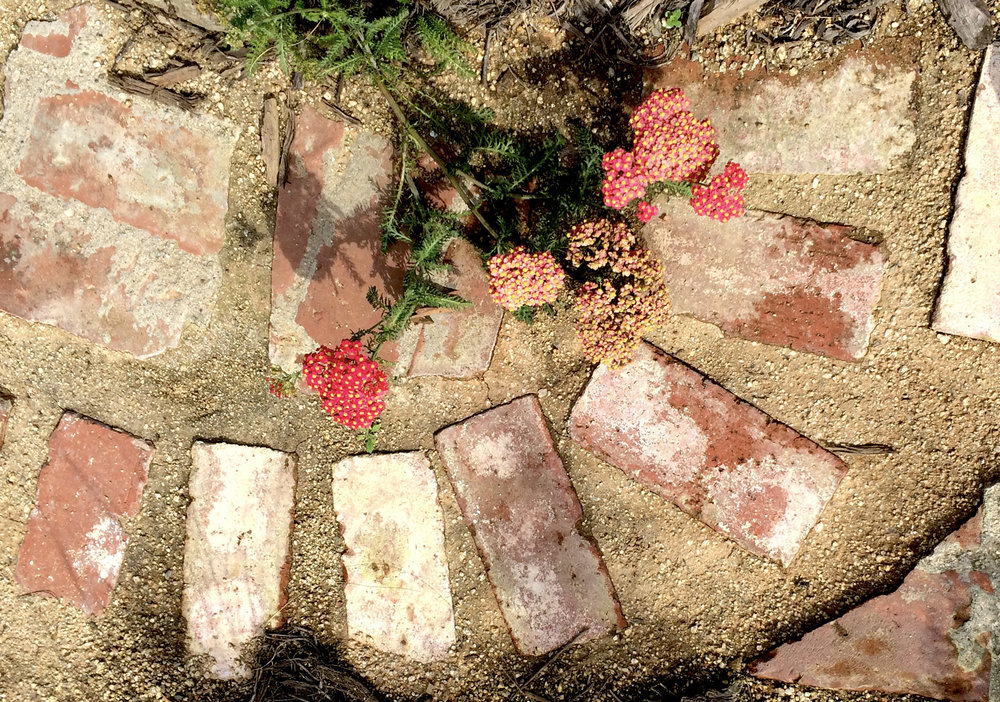 Houzz Reclaimed Brick and Yarrow.jpg