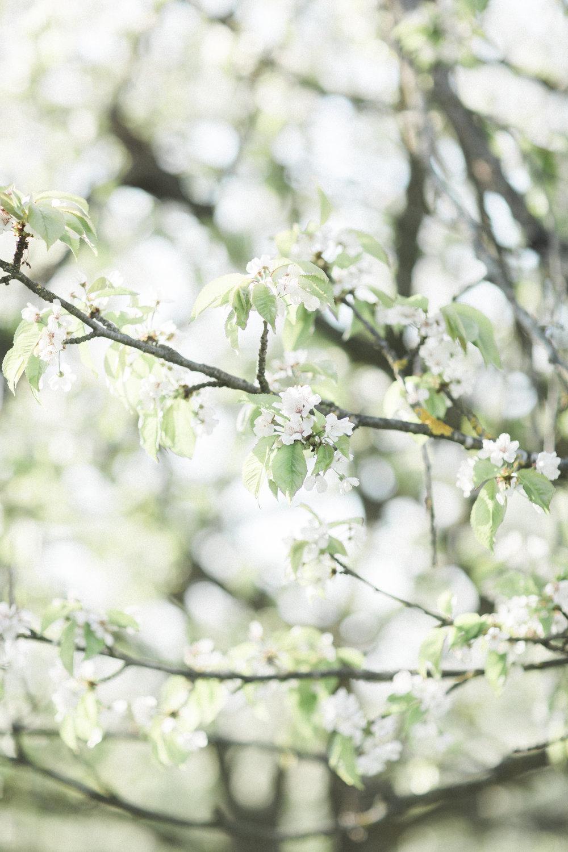 themezzinoi_Spring_-1-63.jpg