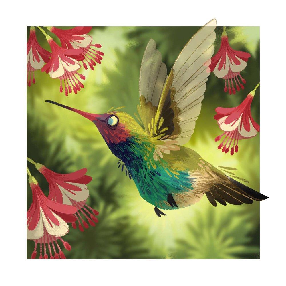 hummingbird_mdemmer.jpg