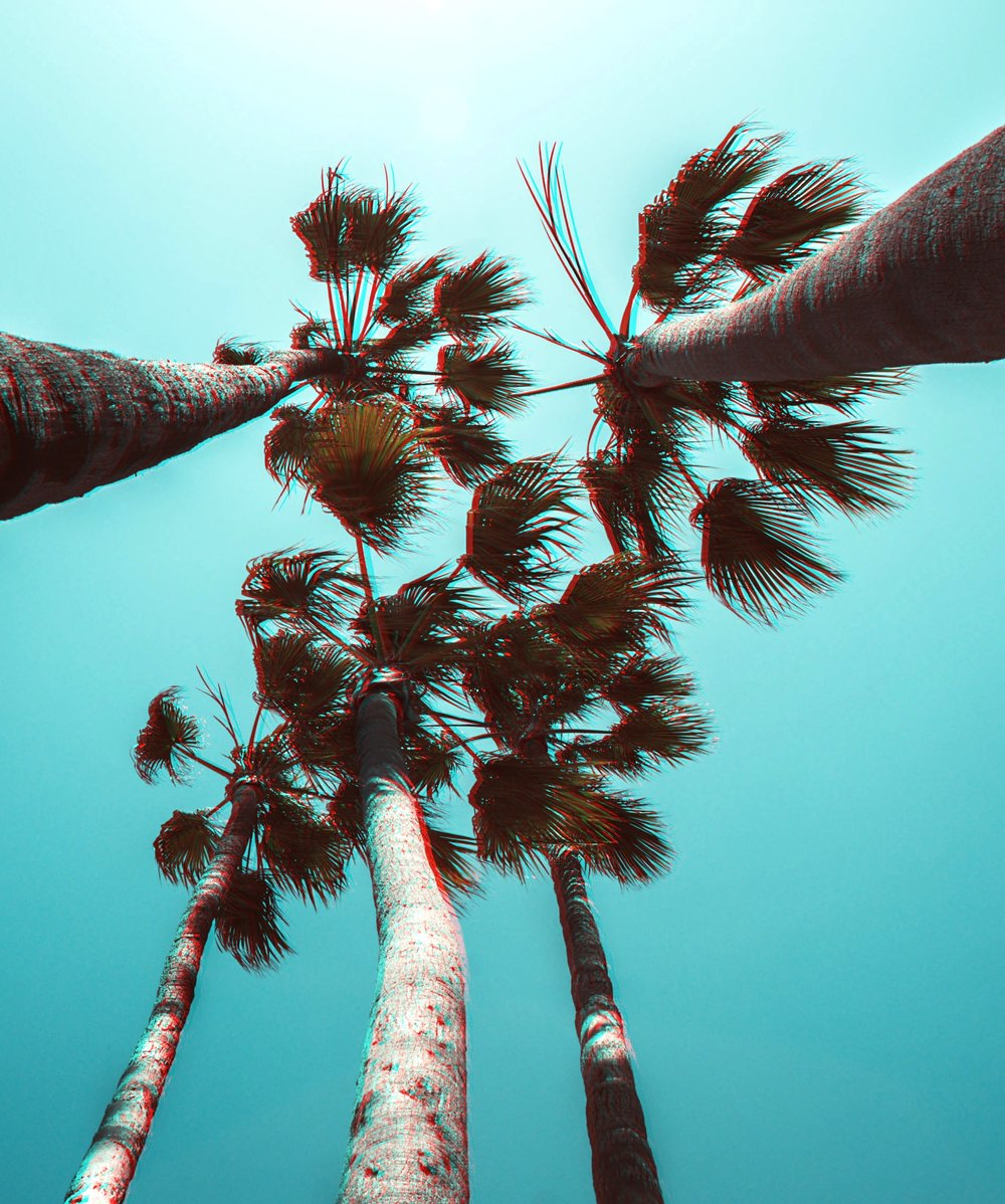 palmsss.jpg