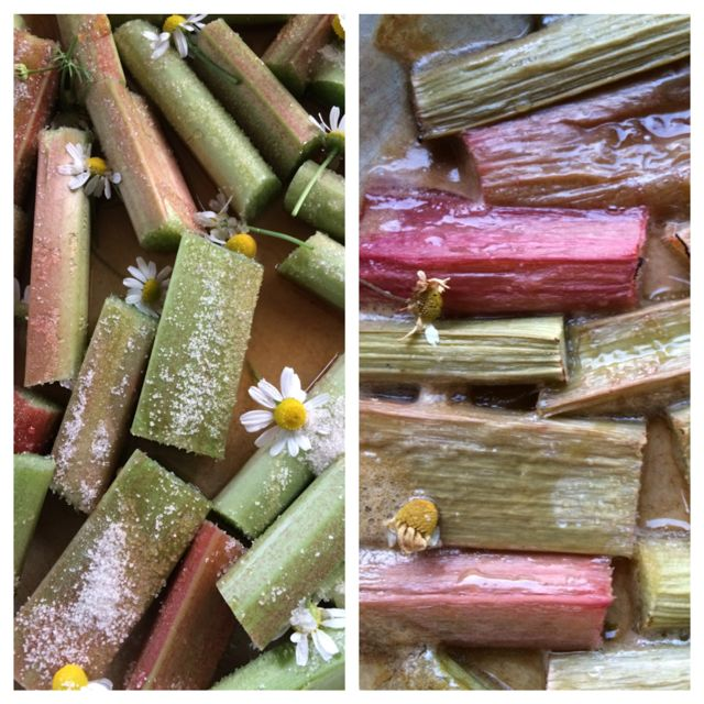 roasted rhubarb with chamomile
