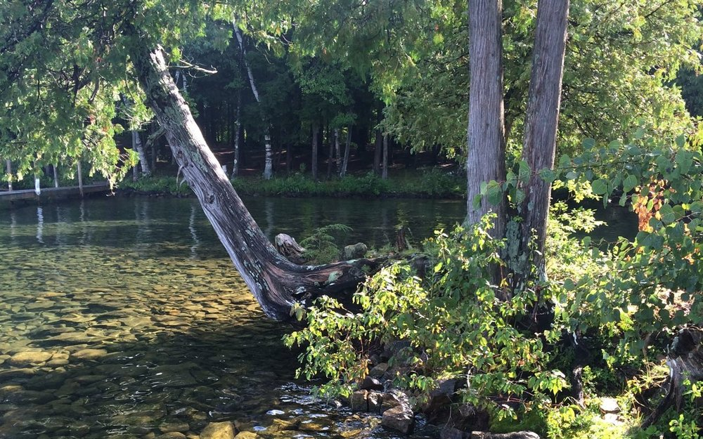 packing tips | pickled beans + life in the woods from a raisin & a porpoise