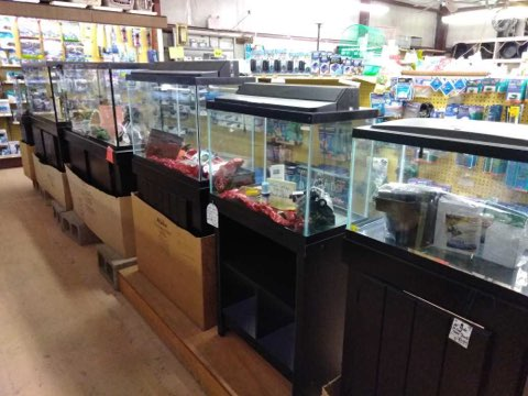 Aquarium Tanks.jpg