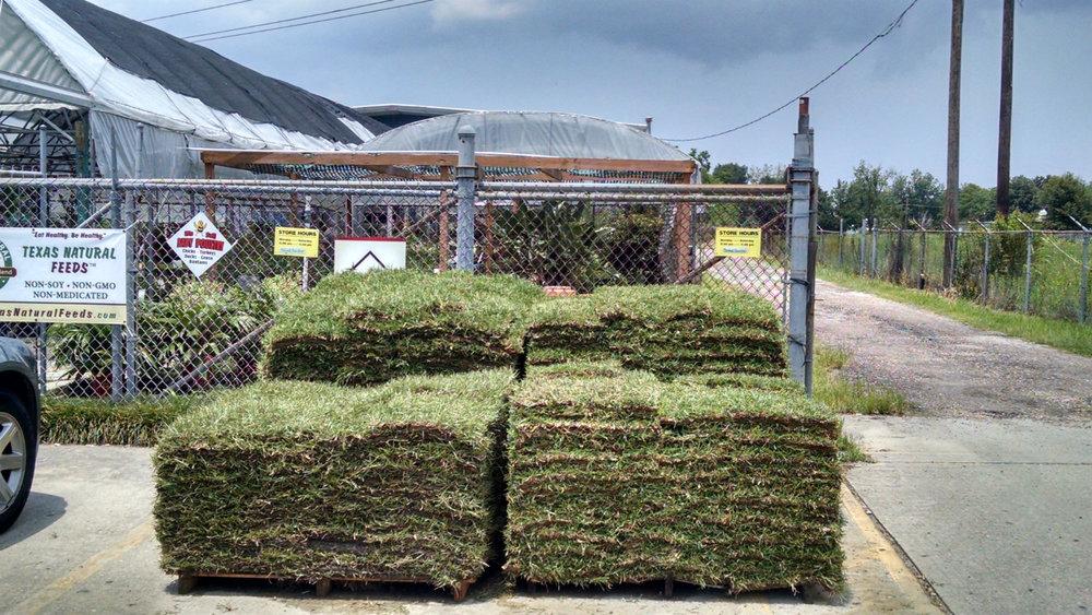 Grass sod.jpg