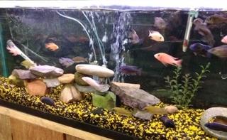 Fish 9.jpg