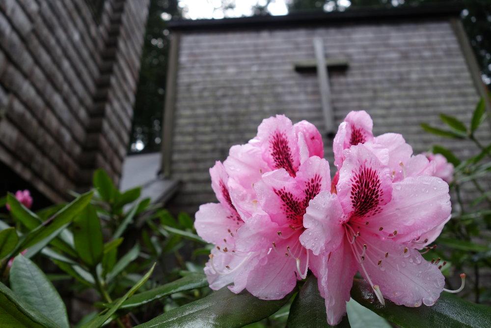 lcofa-flower-cross.JPG