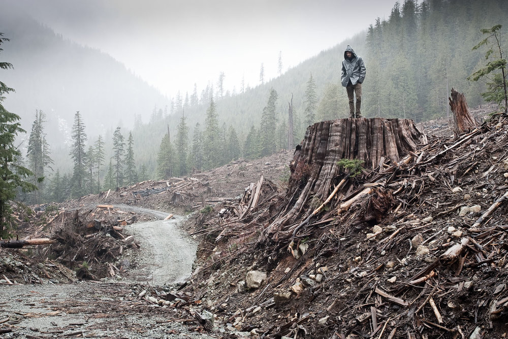 A man stands atop a giant red cedar stump in an old-growth clearcut near Port Renfrew, BC. Old-growth logging still takes place on a large scale in British Columbia. Photo courtesy of TJ Watt.