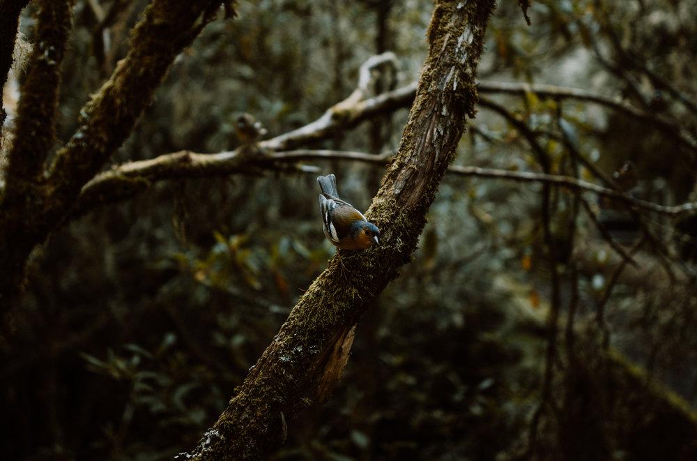 tribephotoco-field-trip-madeira-island-ami-robertson-3.jpg