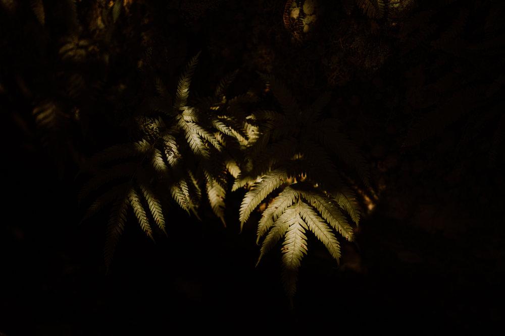 tribephotoco-field-trip-madeira-island-ami-robertson-2.jpg
