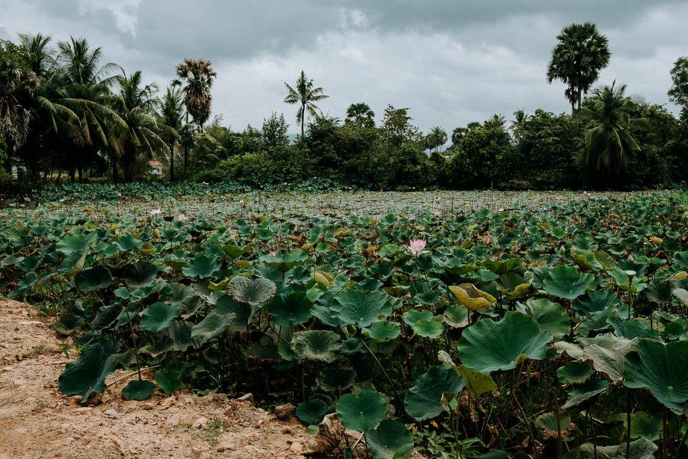 field-trip-discovering-cambodia-radka-horvath-02.jpg