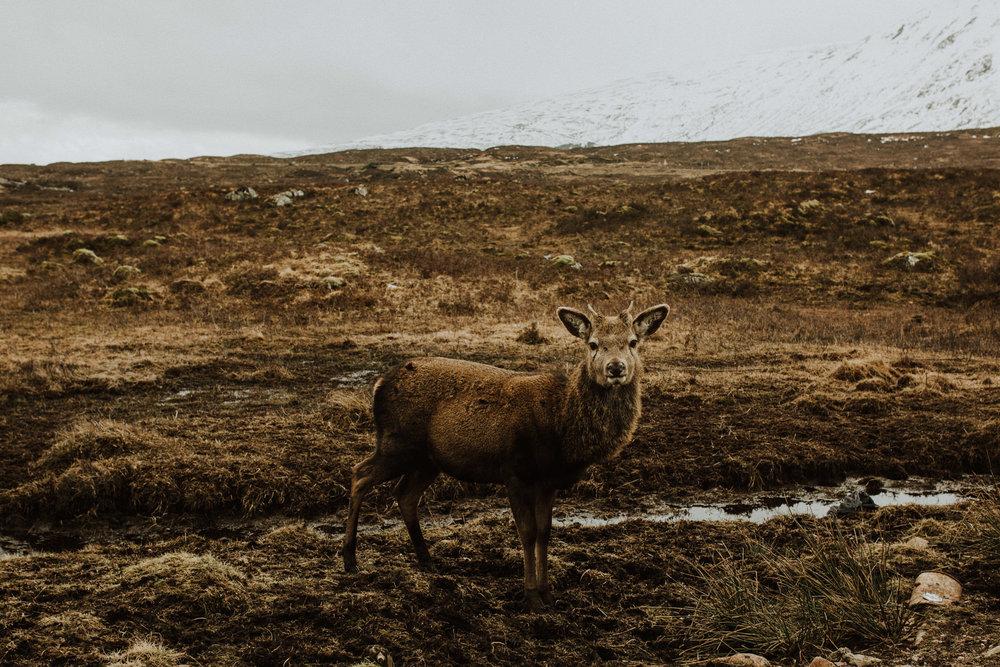 field-trip-creating-memories-scotland-hs-lovestories-71.jpg