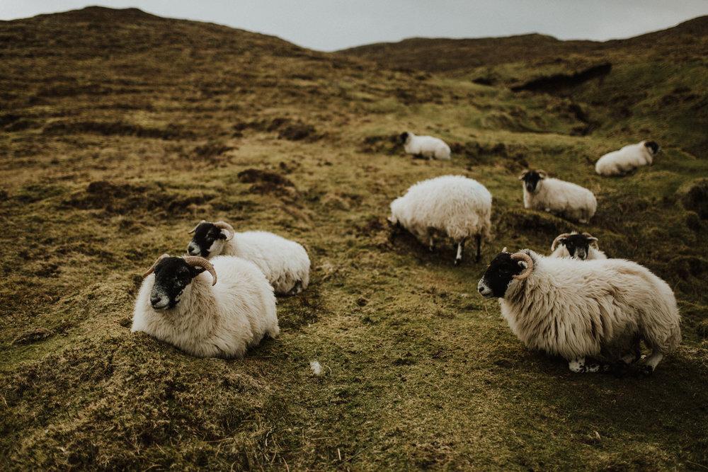 field-trip-creating-memories-scotland-hs-lovestories-97.jpg
