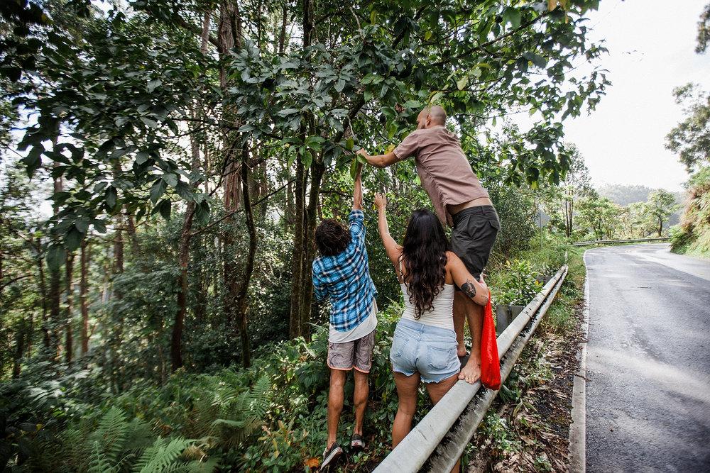 field-trip-hiking-maui-micah-mathis-26.jpg