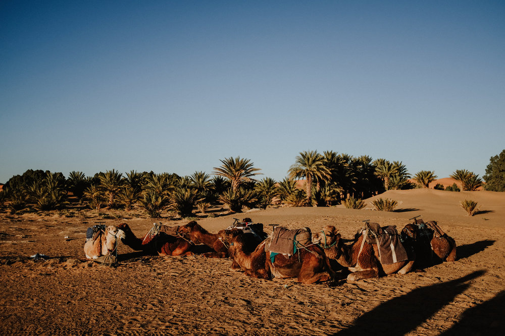field-trip-adventuring-morocco-chris-parkinson-45.jpg