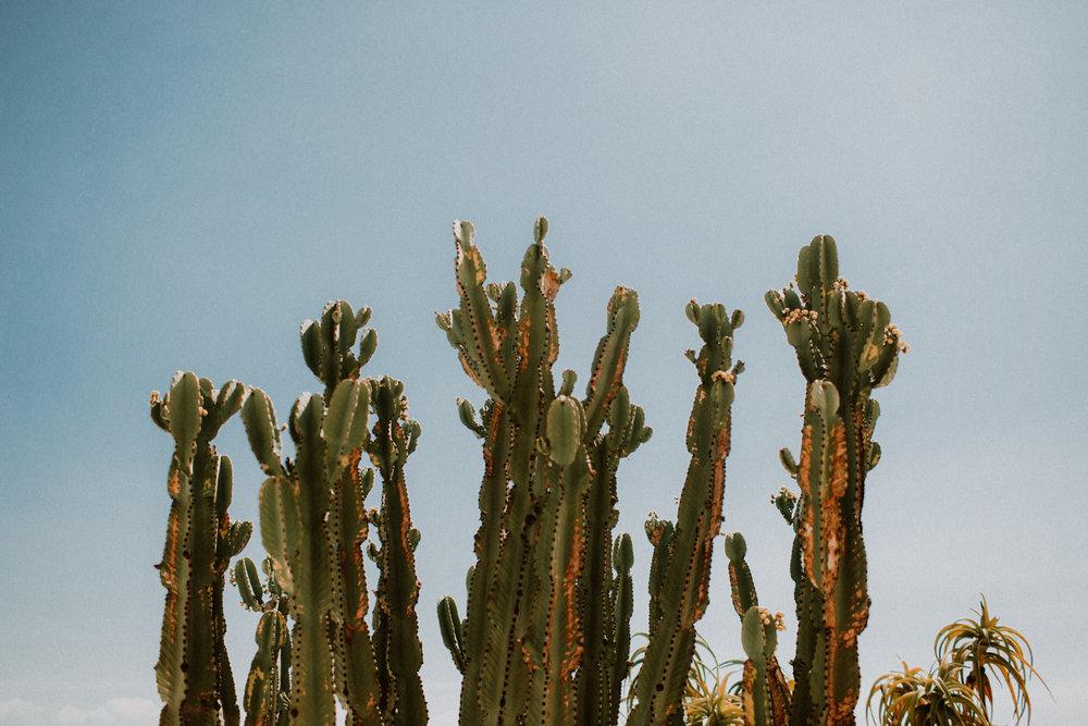 field-trip-exploring-california-coast-curries-21.jpg