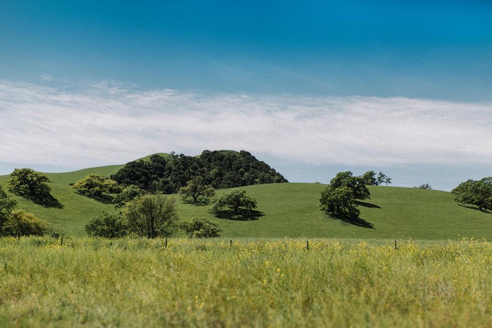 field-trip-monterrey-carmel-california-erin-aasland-03.jpg