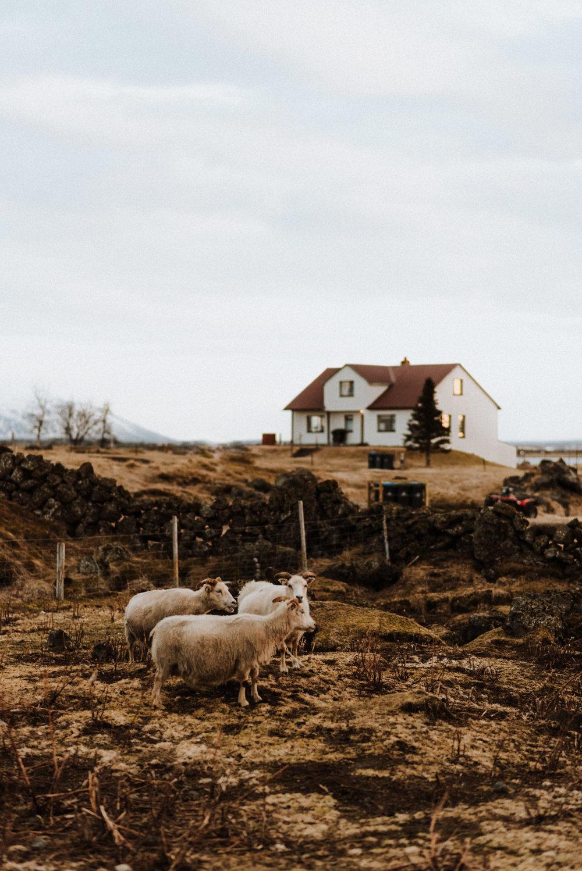 field-trip-experiencing-stillness-iceland-kerlyn-van-gelder-21.jpg