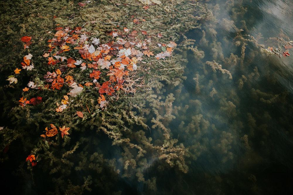 Featured-artist-whitney-jade-photography-1.jpg