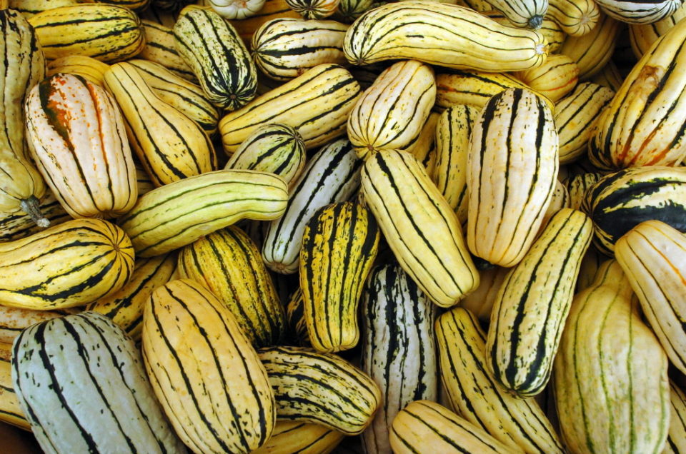 Delicata-Squash-Photos.jpg