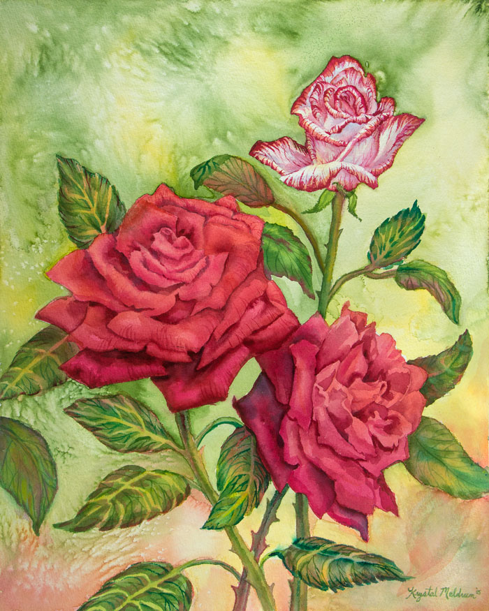 Fire-and-Ice-Roses.jpg