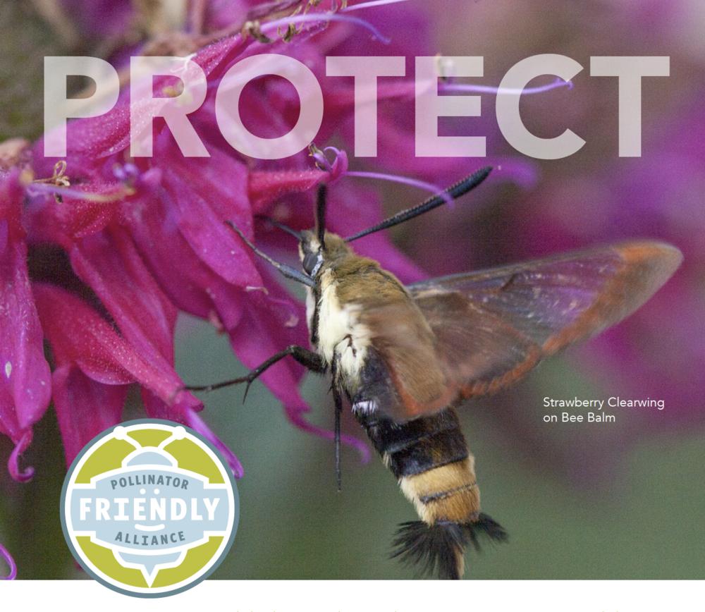 Pollinator Friendly Alliance Newsletter