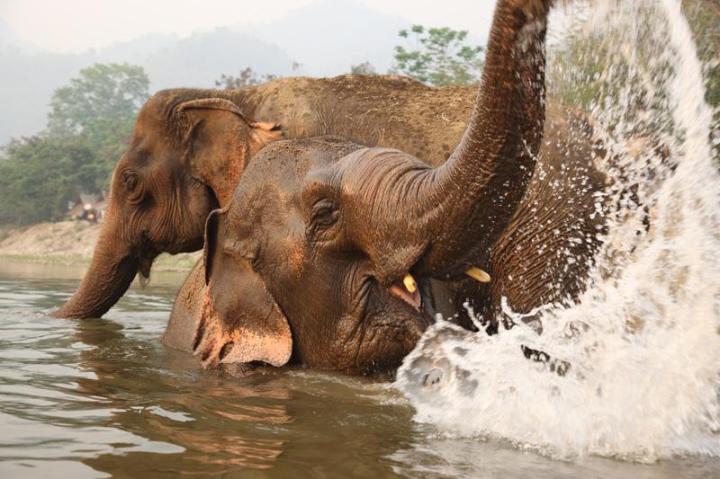 elephant nature park2.png