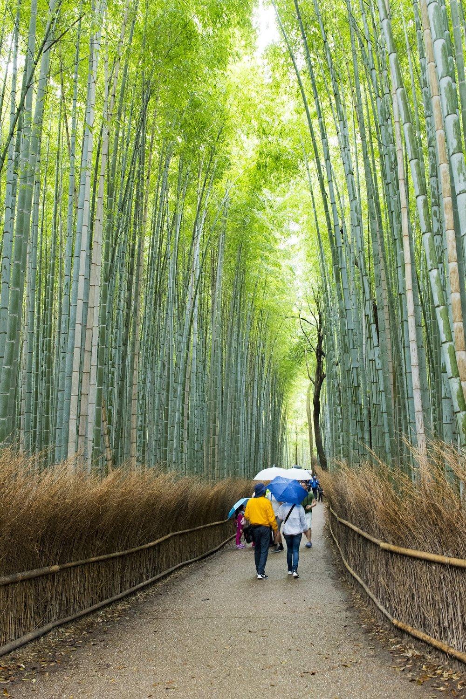 arashiyama-bamboo-grove-2281891_1920.jpg