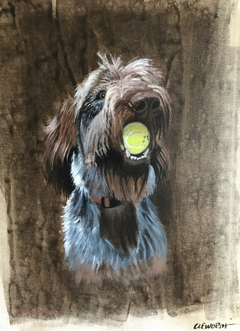 """Sufi the Spinone"""