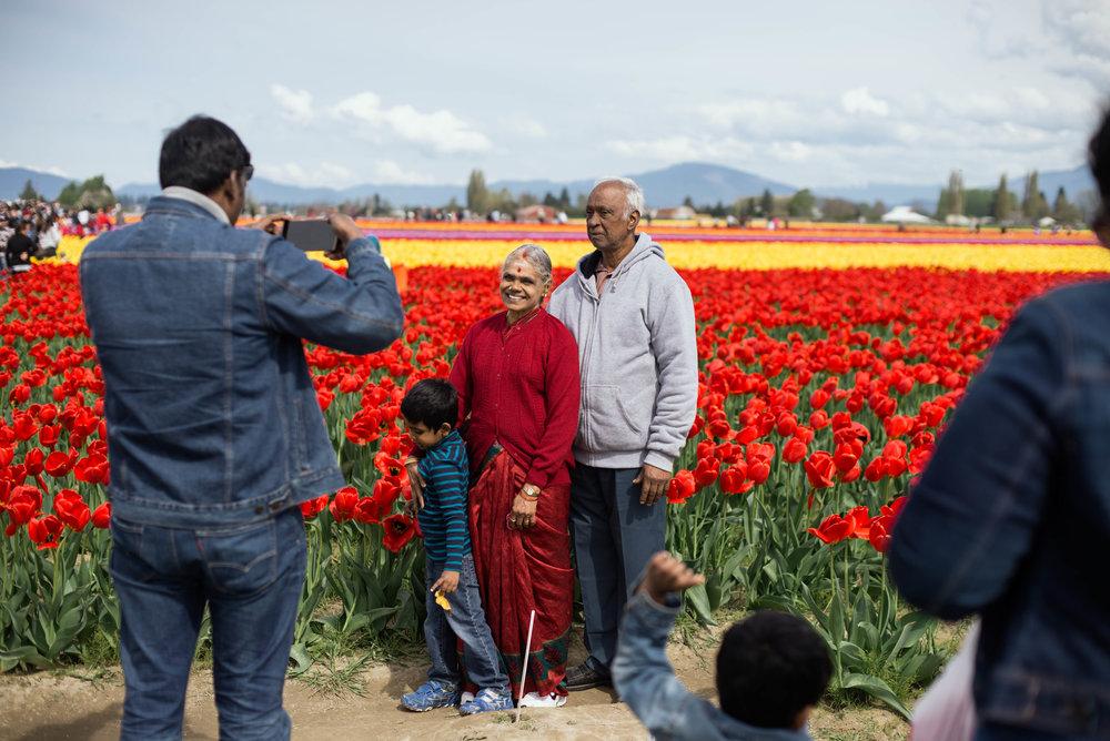 Tulips-16.jpg