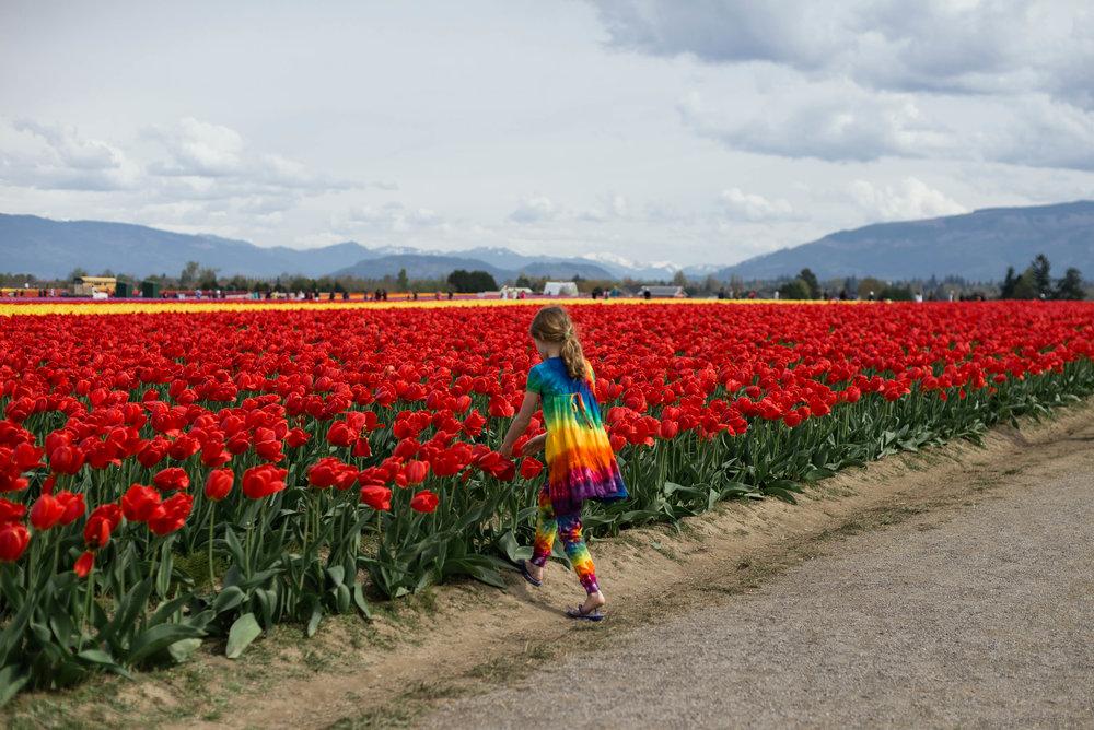 Tulips-18.jpg