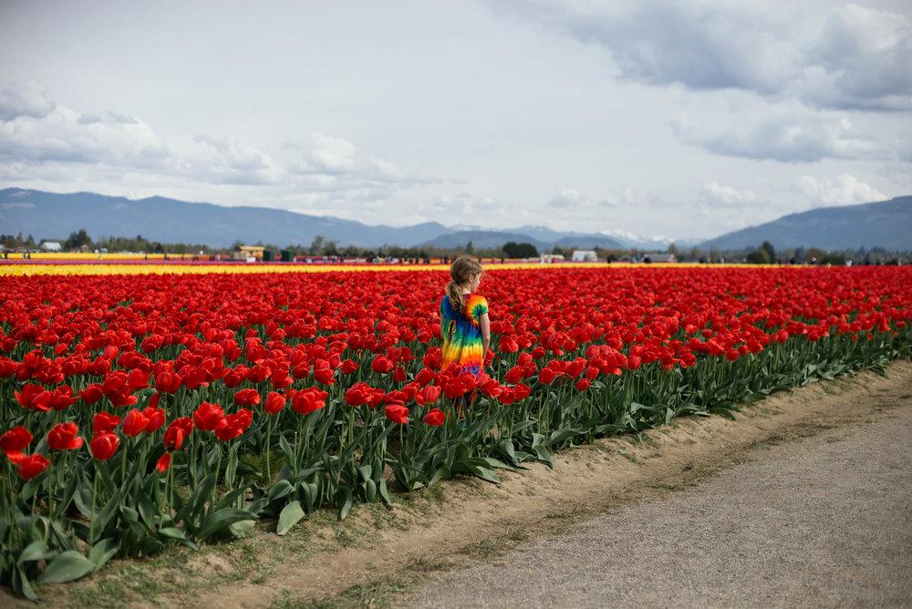 Tulips-20.jpg