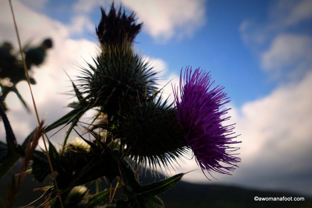 Scotland-Skye-64.jpg