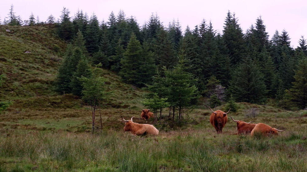 HIking around Fort William and Glenfinnan in Scottish Highlands. awomanafoot.com